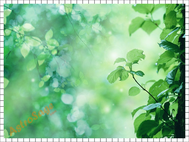 Free Nature backgrounds